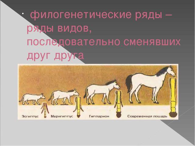 филогенетические ряды – ряды видов, последовательно сменявших друг друга