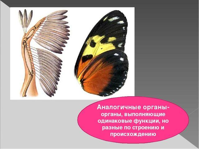Аналогичные органы- органы, выполняющие одинаковые функции, но разные по стр...