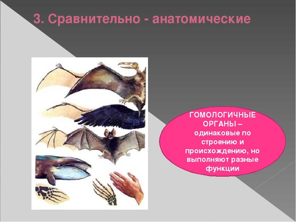 3. Сравнительно - анатомические ГОМОЛОГИЧНЫЕ ОРГАНЫ – одинаковые по строению...