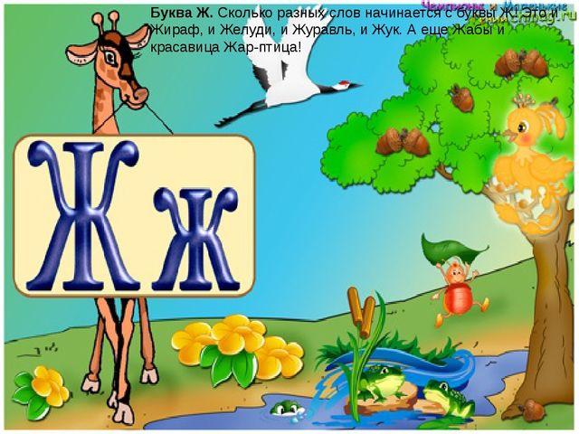 Буква Ж.Сколько разных слов начинается с буквы Ж! Это и Жираф, и Желуди, и Ж...