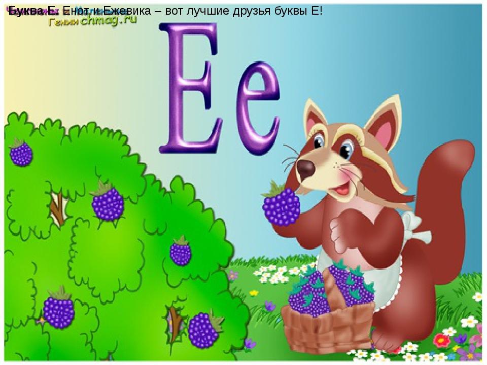 Буква Е.Енот и Ежевика – вот лучшие друзья буквы Е!