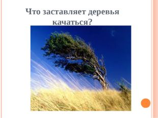 Что заставляет деревья качаться?