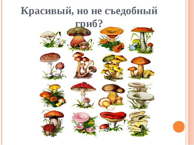 Красивый, но не съедобный гриб?