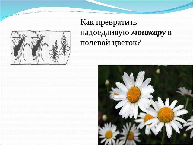 Как превратить надоедливую мошкару в полевой цветок?