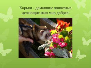 Хорьки - домашние животные, делающие наш мир добрее!