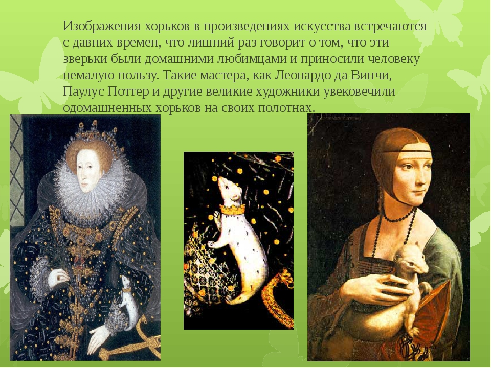 Изображения хорьков в произведениях искусства встречаются с давних времен, чт...