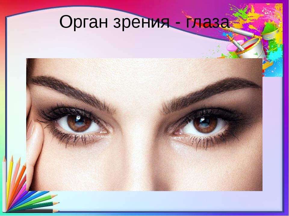 Орган зрения - глаза