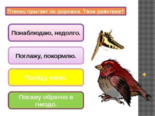 поют птицы; вылетают совы и летучие мыши; закрываются цветы, складываются лис