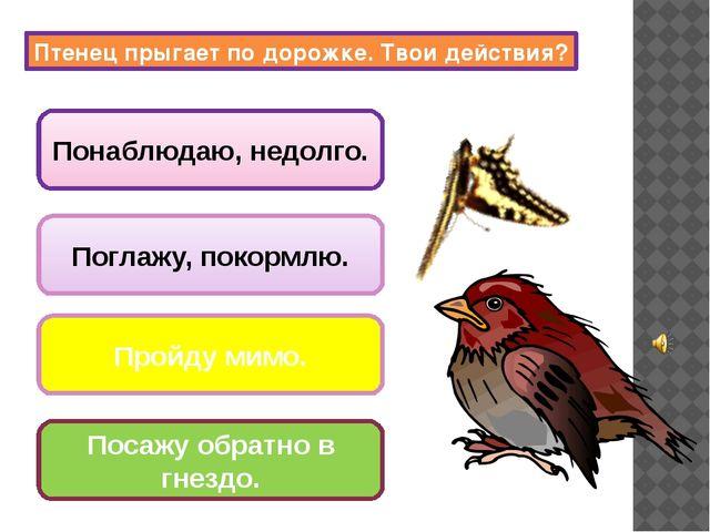 поют птицы; вылетают совы и летучие мыши; закрываются цветы, складываются лис...
