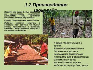 1.2.Производство шоколада. Прежде чем какао-бобы, растущие на какао-дереве, с