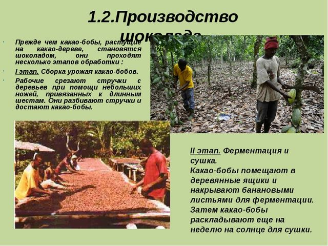 1.2.Производство шоколада. Прежде чем какао-бобы, растущие на какао-дереве, с...