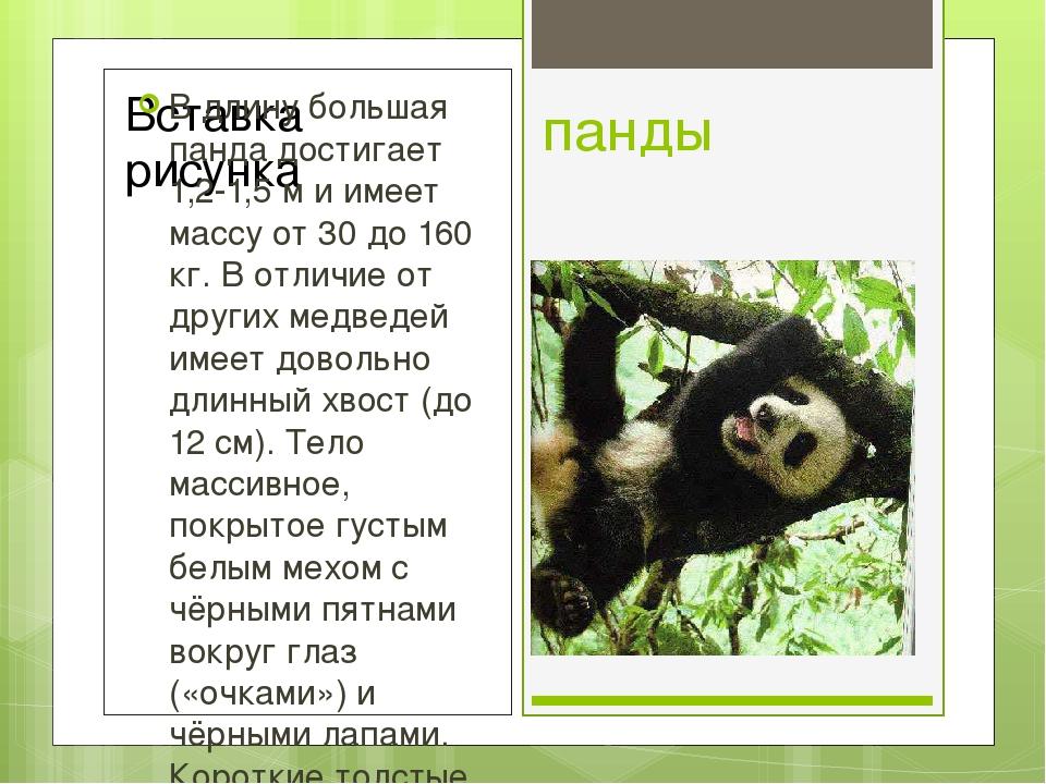 панды В длину большая панда достигает 1,2-1,5 м и имеет массу от 30 до 160 кг...