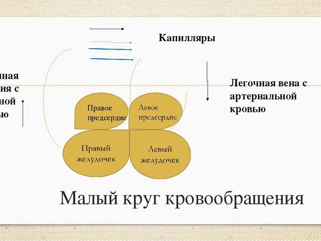 Малый круг кровообращения Правое предсердие Капилляры Легочная вена с артериа...
