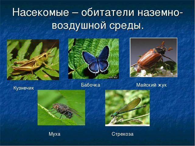 Насекомые – обитатели наземно-воздушной среды. Кузнечик Стрекоза Майский жук...