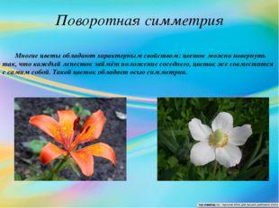 Поворотная симметрия Многие цветы обладают характерным свойством: цветок можн