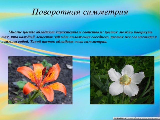 Поворотная симметрия Многие цветы обладают характерным свойством: цветок можн...