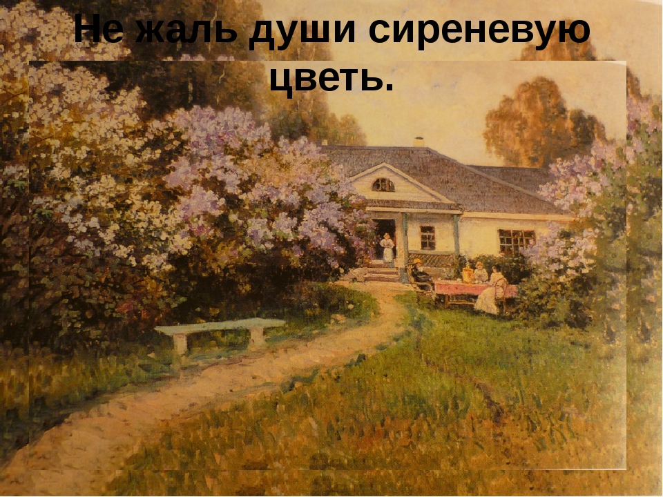 Не жаль души сиреневую цветь.