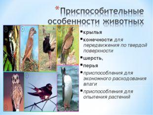 крылья конечности для передвижения по твердой поверхности шерсть, перья прис