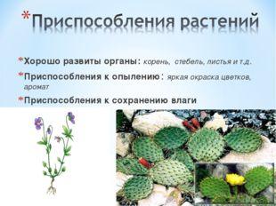 Хорошо развиты органы: корень, стебель, листья и т.д. Приспособления к опыле