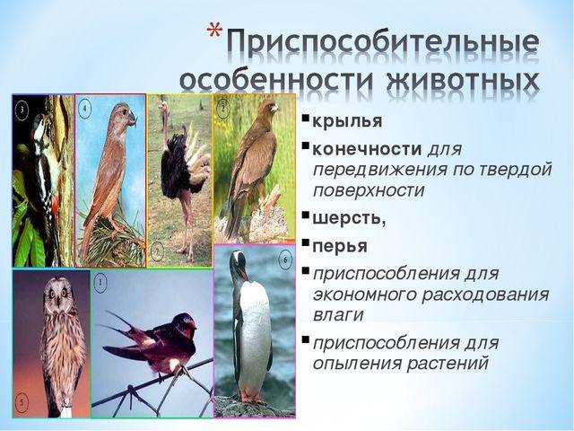 крылья конечности для передвижения по твердой поверхности шерсть, перья прис...