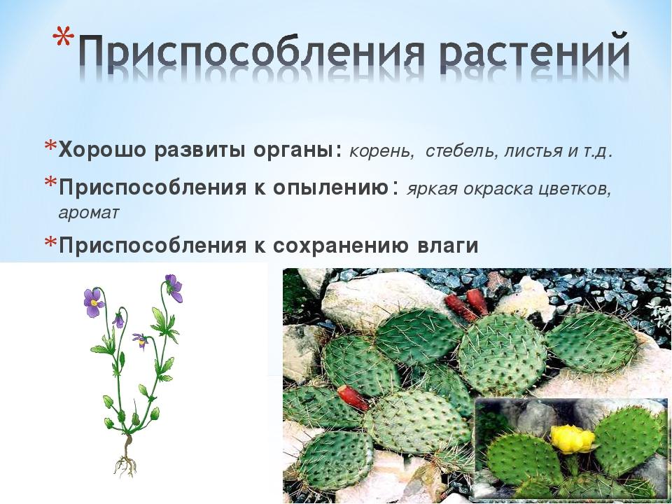 Хорошо развиты органы: корень, стебель, листья и т.д. Приспособления к опыле...