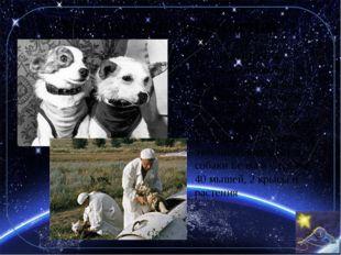 Успешное возвращение 19 августа 1960 — совершён первый в истории орбитальный