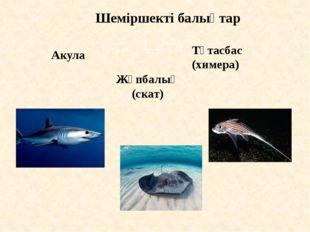 Шеміршекті балықтар Акула Жұпбалық (скат) Тұтасбас (химера)