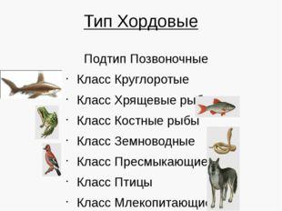 Тип Хордовые Подтип Позвоночные Класс Круглоротые Класс Хрящевые рыбы Класс К