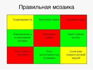 Правильная мозаика Хладнокровность Волосянойпокров Перьевойпокров Живорождени