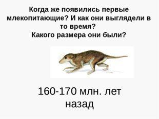 Когда же появились первые млекопитающие? И как они выглядели в то время? Како