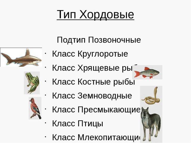 Тип Хордовые Подтип Позвоночные Класс Круглоротые Класс Хрящевые рыбы Класс К...