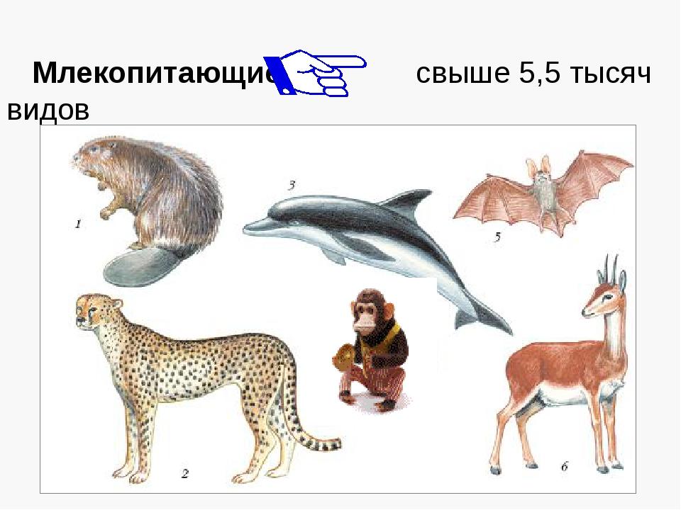 Млекопитающие свыше 5,5 тысяч видов