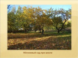 Яблоневый сад при школе