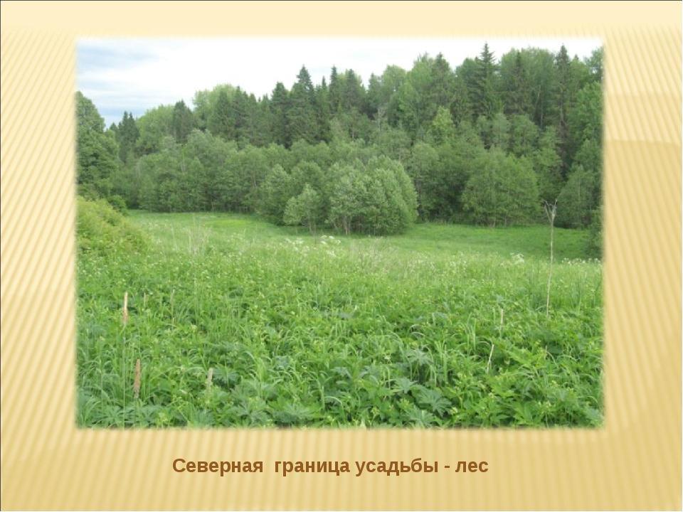 Северная граница усадьбы - лес