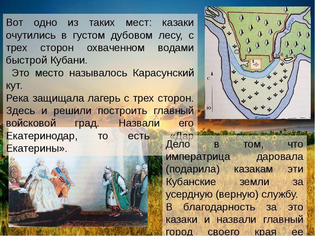 Вот одно из таких мест: казаки очутились в густом дубовом лесу, с трех сторон...