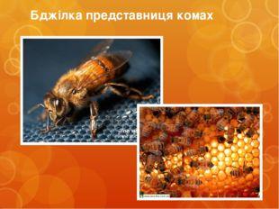 Бджілка представниця комах