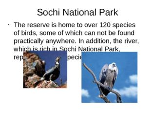 Sochi National Park The reserve is home to over 120 species of birds, some of
