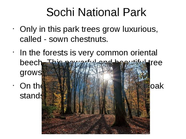 Sochi National Park Only in this park trees grow luxurious, called - sown che...