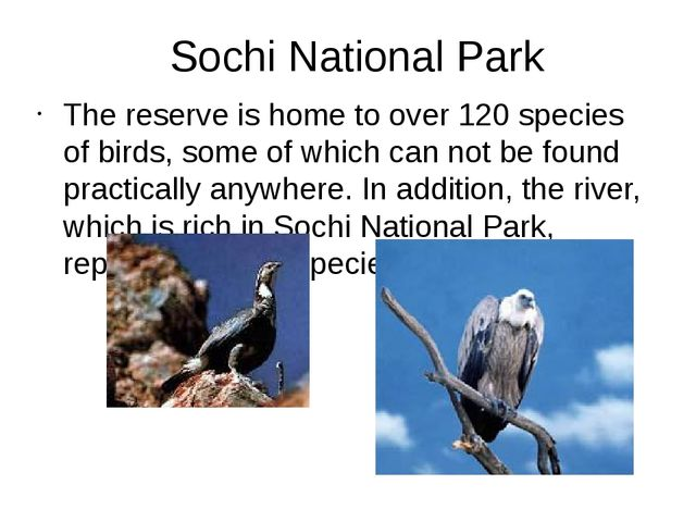 Sochi National Park The reserve is home to over 120 species of birds, some of...