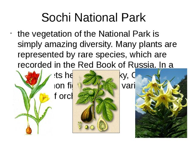 Sochi National Park the vegetation of the National Park is simply amazing div...