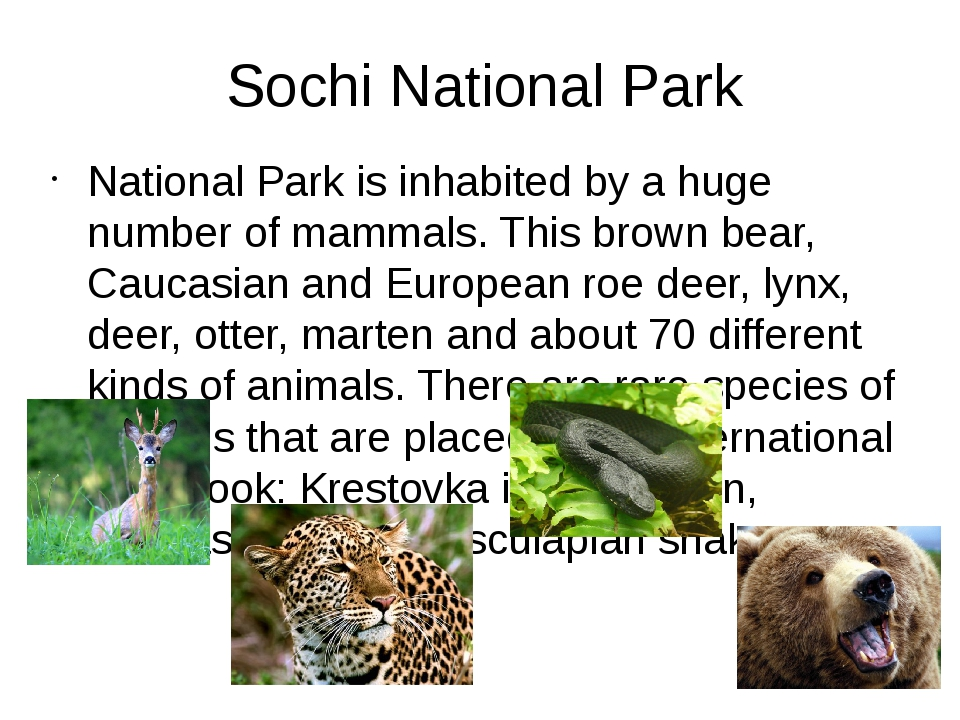 Sochi National Park National Park is inhabited by a huge number of mammals. T...