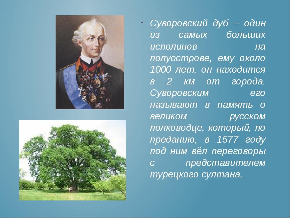 Суворовский дуб – один из самых больших исполинов на полуострове, ему около 1...