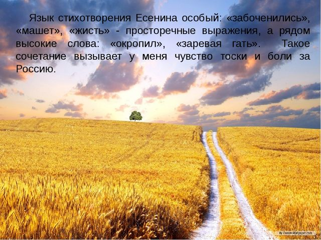 Язык стихотворения Есенина особый: «забоченились», «машет», «жисть» - просто...