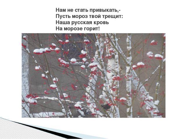 Нам не стать привыкать,- Пусть мороз твой трещит: Наша русская кровь На мороз...