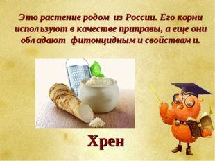 Это растение родом из России. Его корни используют в качестве приправы, а еще