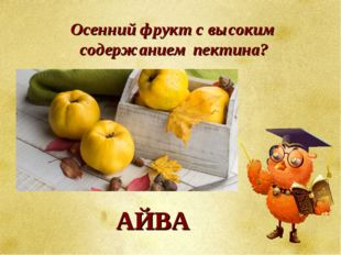 Осенний фрукт с высоким содержанием пектина? АЙВА