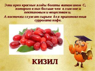 Эти ярко красные ягоды богаты витамином С, которого в них больше чем в лимоне