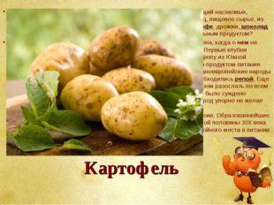 Картофель Декоративный цветок, лекарство от всех болезней, яд, истребляющий н