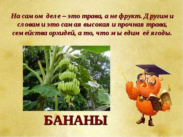 На самом деле – это трава, а не фрукт. Другими словами это самая высокая и пр...