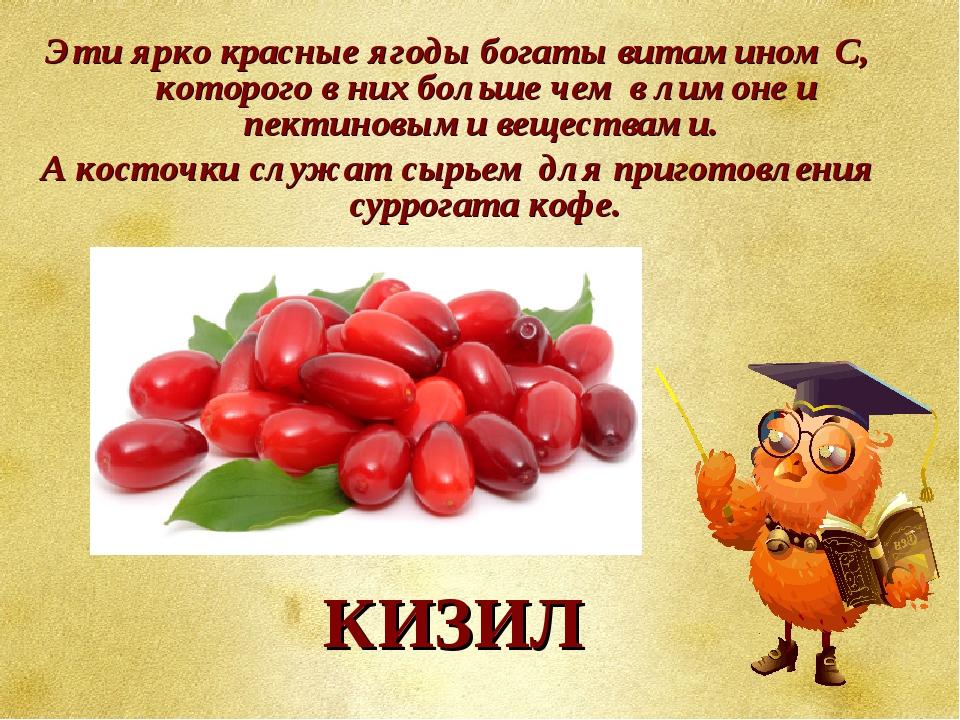 Эти ярко красные ягоды богаты витамином С, которого в них больше чем в лимоне...
